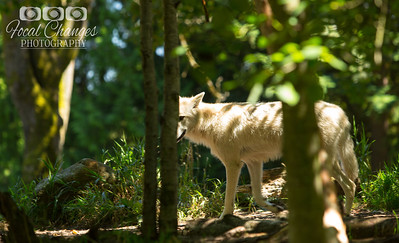 2013_07_27_WoodlandParkZoo-4524