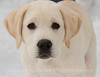 Had a great day shooting eagles but along the way we met this young lady who is destined to be a guide dog. She was having so much fun in the snow