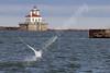 02-04-2012-Swan_Lighthouse-8845