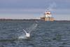 02-04-2012-Swan_Lighthouse-8843
