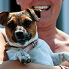 Jack Russell - Chapel Saint Leonards - June 2010