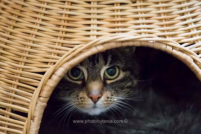 Gypsy hides out in her house.  See more photos in the archive