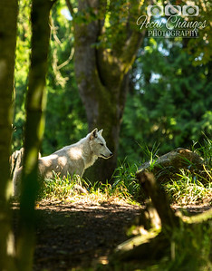 2013_07_27_WoodlandParkZoo-4855