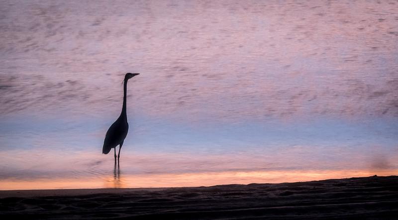 Egret in Silhouette at Sunrise