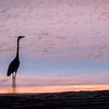 Egret in Silhouette at Sunrise