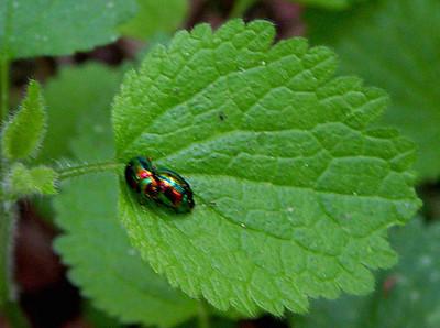Amorous bugs