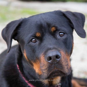 Beautiful Ruby, I just want to hug her again.  See more photos in the archive