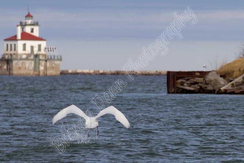 02-04-2012-Swan_Lighthouse-8847