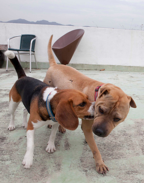 Ruby and Pei playing (taken by Susan)