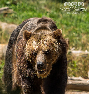 2013_07_27_WoodlandParkZoo-4820