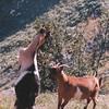 Cabras en los Picos de Europa