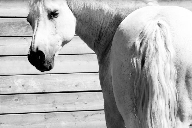 B & W pony_SM