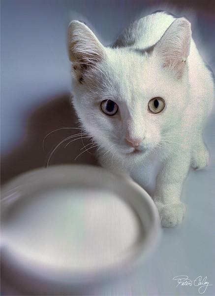 Cat with Milk Bowl