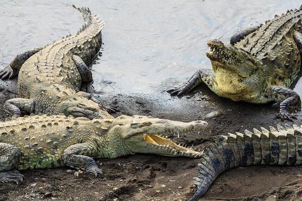 "From the Tárcoles ""Crocodile"" bridge"