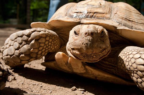 warm turtle