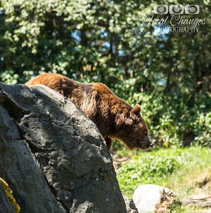 2013_07_27_WoodlandParkZoo-4796