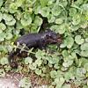 Wet Ground Squirrel