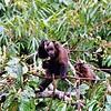 scratching monkey