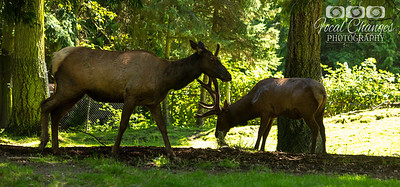 2013_07_27_WoodlandParkZoo-4747