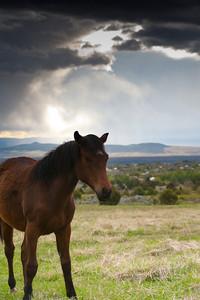 Horses-2