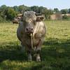 Toro (Francia)
