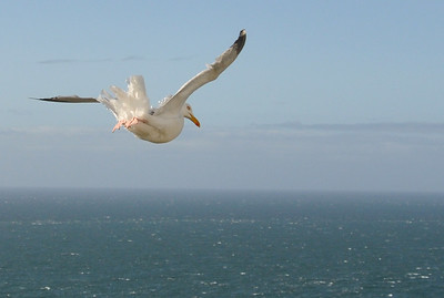 Seagull flying over the ocean