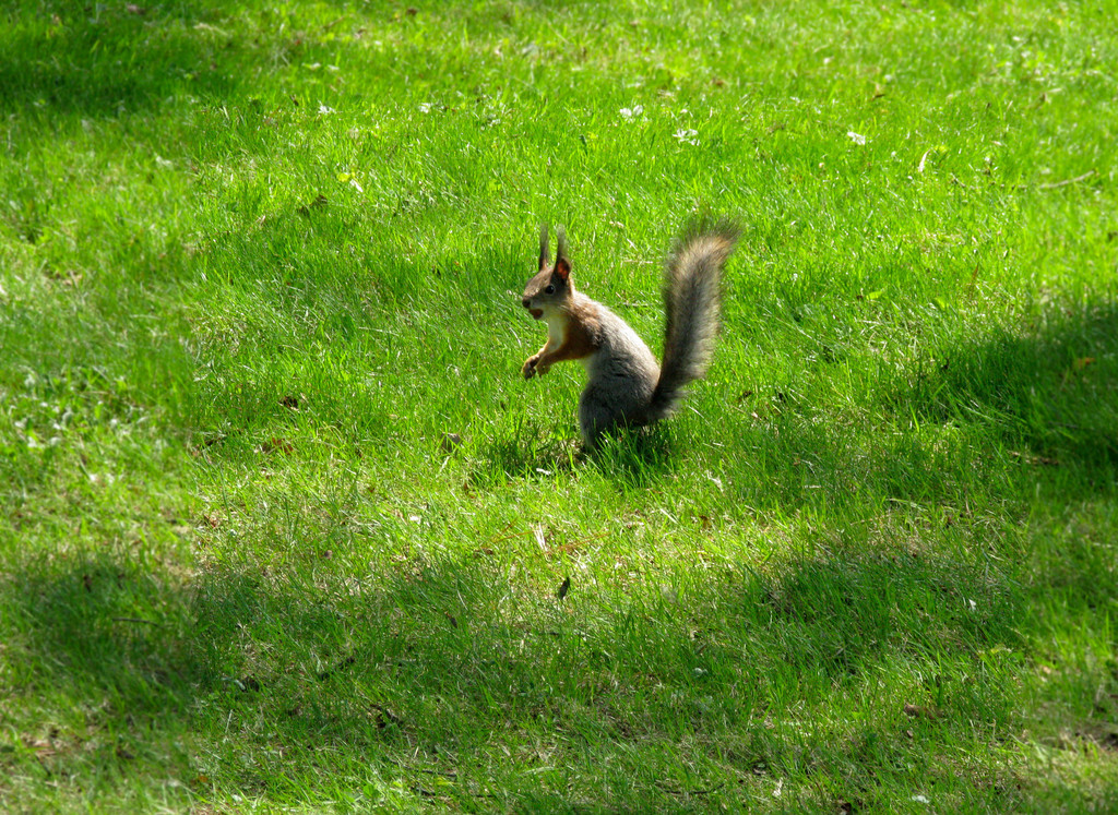 Squirrel in Alexandria Park.