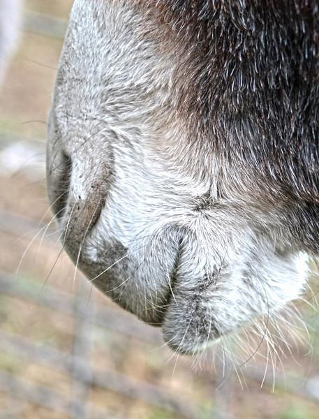 Donkey lips