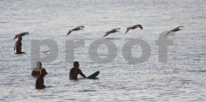 """Surfers watch line of Pelicans """"play through"""""""