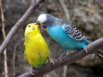 Bird Kisses