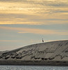 Single Heron on Top of Sand Dunes