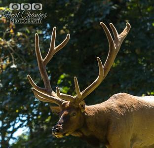 2013_07_27_WoodlandParkZoo-4686