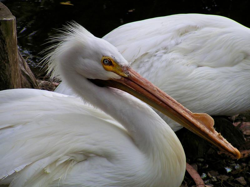 Storks beak
