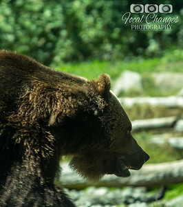 2013_07_27_WoodlandParkZoo-4632