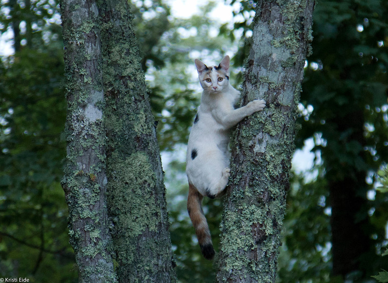 Cats were running around, playing, and climbing the trees.  Very cute!!