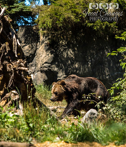2013_07_27_WoodlandParkZoo-4810