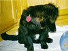 Mitch & his little Sister Cinnamon