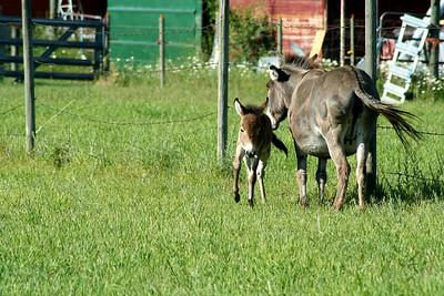 Mrs. Q & her new baby. June 2009