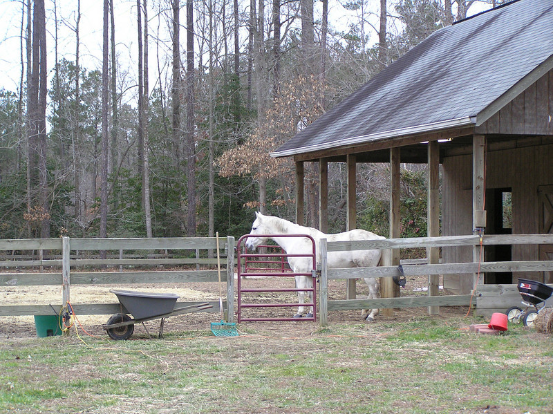Bebe in front of the Barn