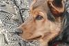 Dog in Profile