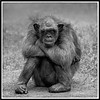 Affen-Oma