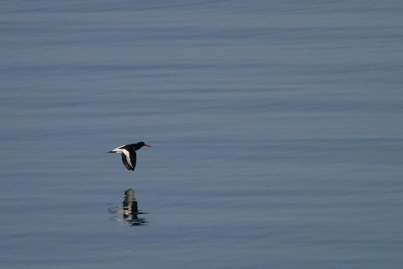 Sobrevolando el mar