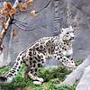 "Snow Leopard<br /> <br />  <a href=""http://www.snowleopard.org/"">http://www.snowleopard.org/</a>"
