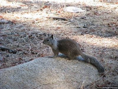 0925_2982_Squirrel