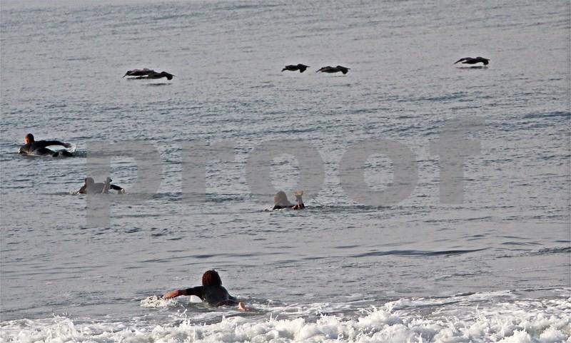 Surfers paddle southwest, Pelican squadron glides north