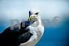 Seagull on Malibu Beach, 3rd Point