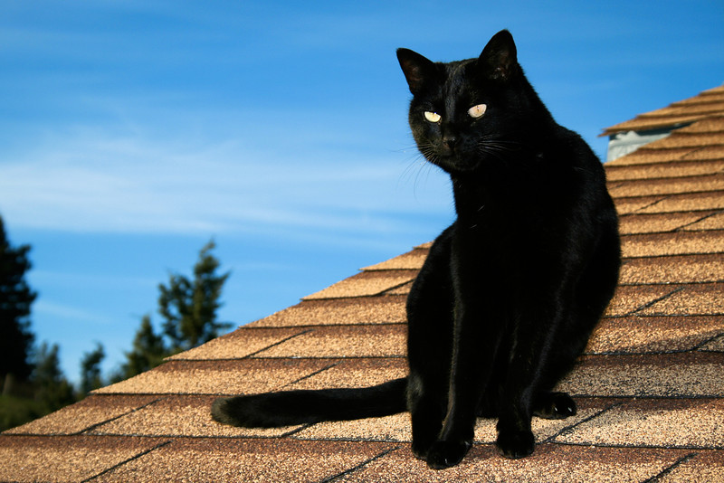 Cat on Winery Roof, Philo CA