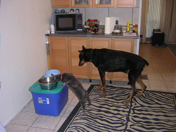 Luger waiting in line for some water. Shadow was certainly the boss of the house after Shamu passed away.