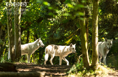 2013_07_27_WoodlandParkZoo-4849