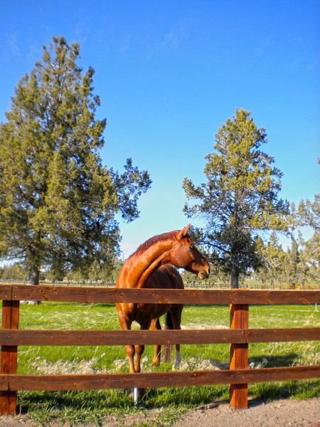 A good day to be a horse